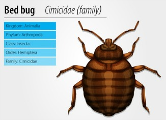 Bed Bug Vs Tick Decoration Image Ideas