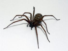 spider bite treatment for the skin