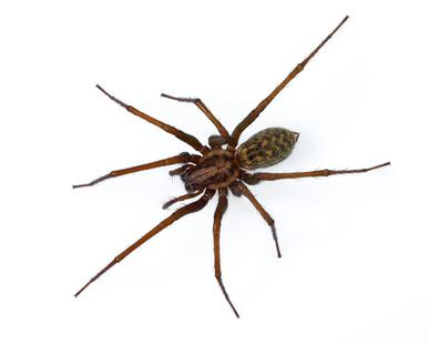 spider bite symptoms caused by a spider bite