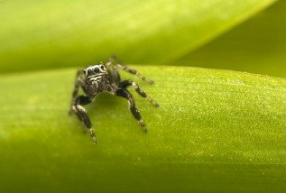 The jumping spider is the most common biting spider in the United States.